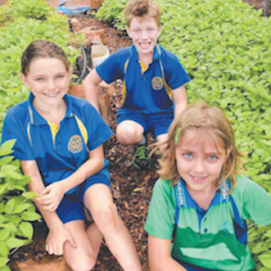 Parap Eco Schools